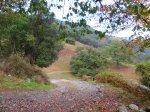 Chestnut trees, Ramales de la Victoria