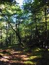 Beech woods, Hondajón, Asón