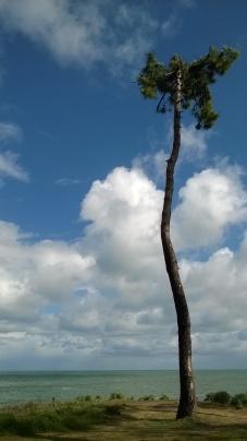 Lone tree, Noja coast path