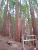 Sequoia wood, Cabezón de la Sal