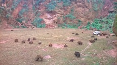 Bears, Cabárceno Natural Park