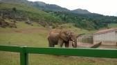 Elephants, Cabárceno Natural Park