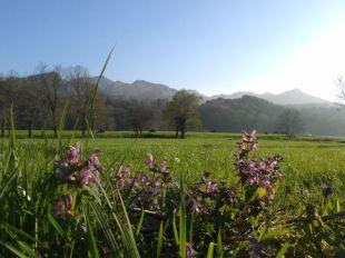 Miera valley, La Cavada
