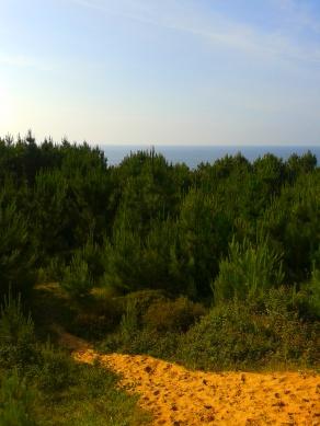 Pine woods, Liencres