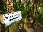 Pine wood walks, Playa de Valdearenas, Liencres