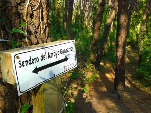 Pine wood walks, Playa de Valdearenas, Liencres