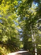 Beechwoods of the Saja valley