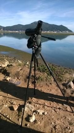 Birdwatching, Santoña